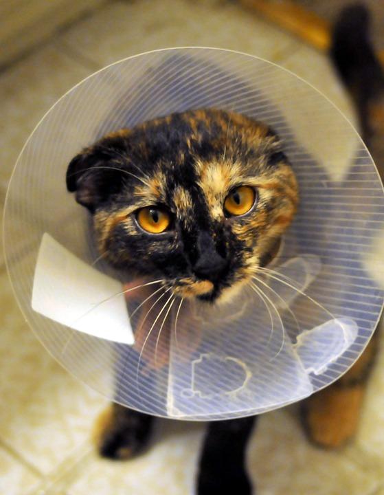 téléphone vétérinaire