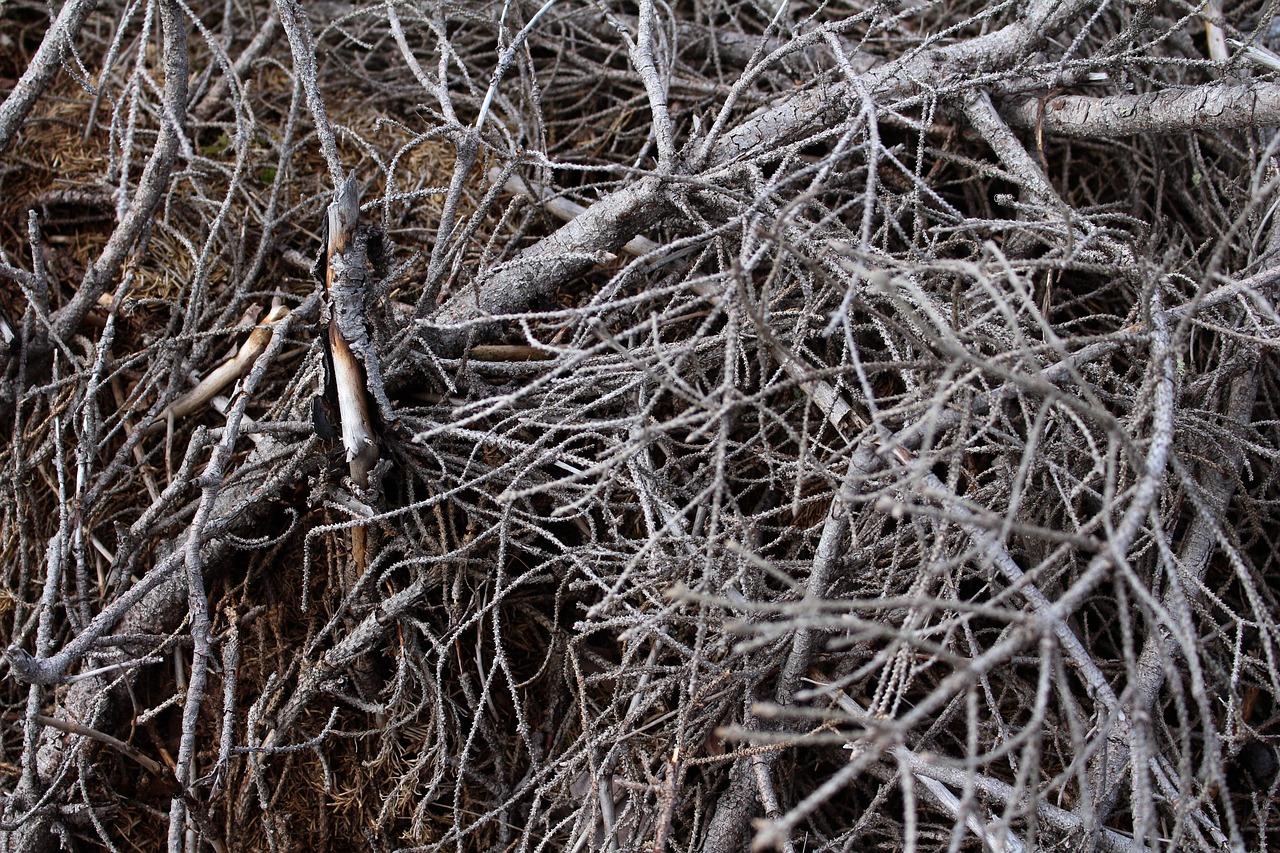 broyeur branche
